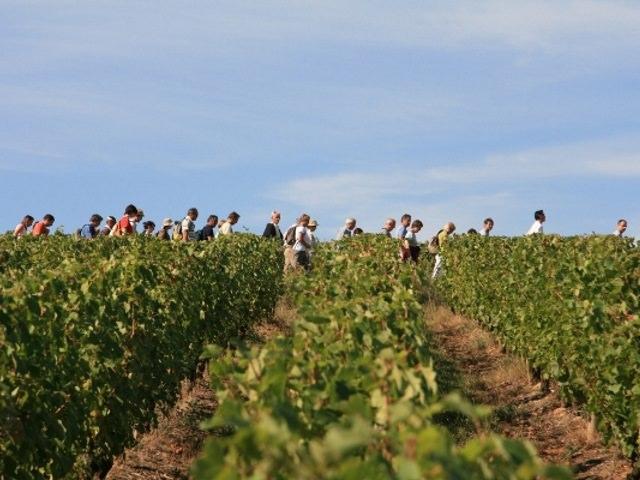 Balade vigne et vin 26 juillet 2017 avec l'Espace Rabelais à 9h00